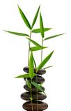 Bamboo and rocks