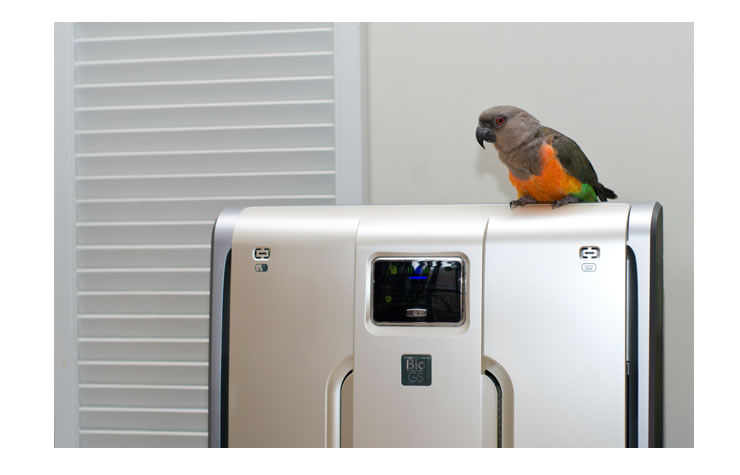 bird and air purifier